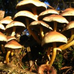 Psychedelic mushrooms could help ease anxiety and rejection