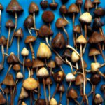 Magic mushrooms are the safest drug, study finds.