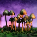 Campaign in California to legalise magic mushrooms under way