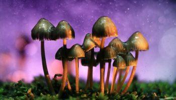 Campaign in California to legalise magic mushrooms under way