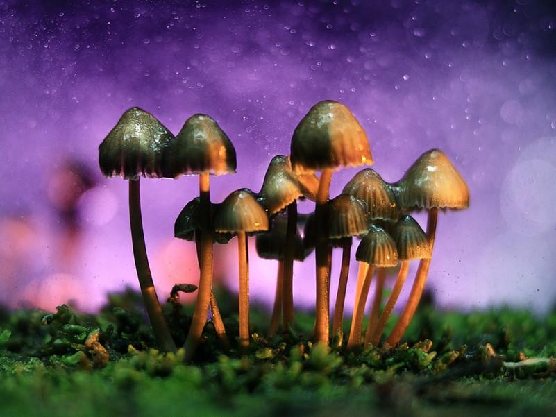 Legalise magic mushrooms