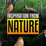 Taking sound design inspiration from the sounds of nature
