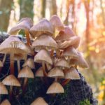 Johns Hopkins' Psychedelic Research Center launched
